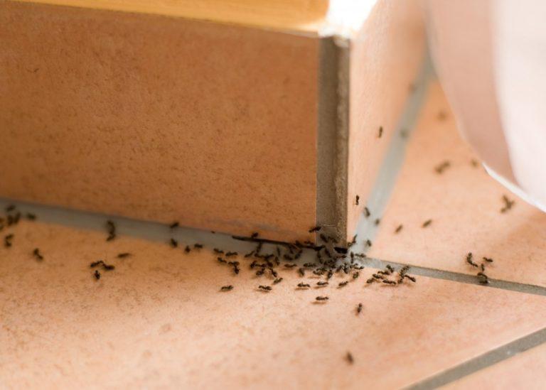 pests concept